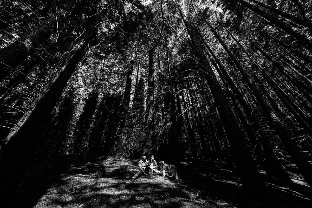 Preboda en el bosque de sequoias Sara y David weloveyourlove 007