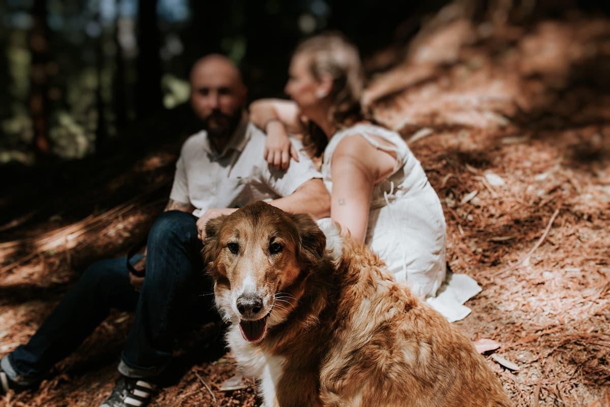 Preboda en el bosque de sequoias Sara y David weloveyourlove 014
