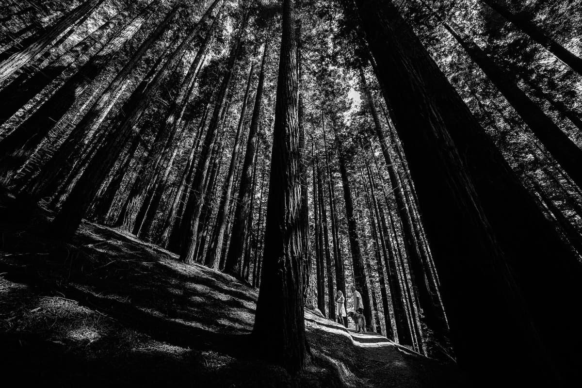 Preboda en el bosque de sequoias Sara y David weloveyourlove 022